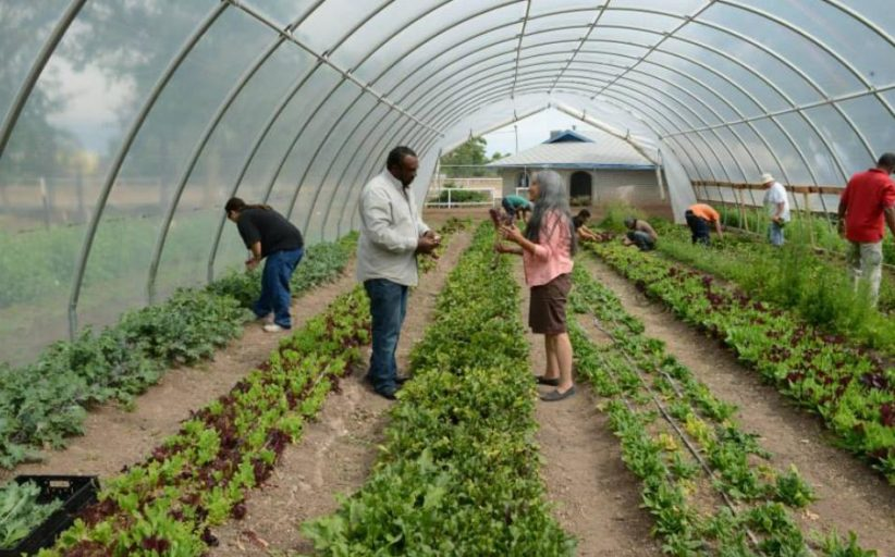 Black Farmers Are Reclaiming The Industry from Racism, Stereotypes and a Difficult Past