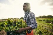 Black farmers accuse the USDA of racism. The USDA appears to agree and vows to address 'historical discrimination.'
